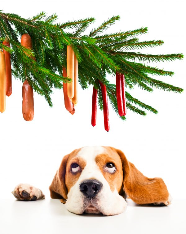 Your Property Hound Christmas